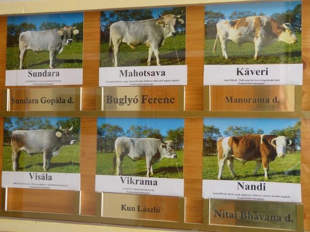 У каждого из сорока находящихся здесь коров и быков есть своё имя