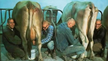 Devotees-at-New-Vrindavan-Milking-Cows-620x350